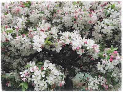 pink-tree1.jpg